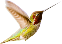 colibri-s